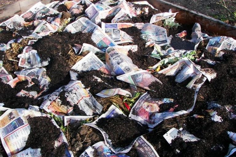 Weeds Newspaper DIY Gardening